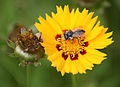 Insekt2013.jpg