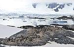 Islas Yalour 5, pingüinos.jpg