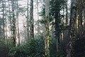 Ivy woods (Unsplash).jpg