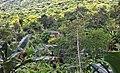 Jacarepaguá, Rio de Janeiro - State of Rio de Janeiro, Brazil - panoramio (6).jpg