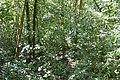 Jamaca Trail ... (48359066491).jpg