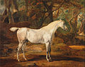 James Ward - Grey Arabian stallion, the property of Sir Watkin Williams-Wynn - Google Art Project.jpg