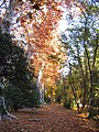 Jardín del Príncipe en otoño - panoramio.jpg