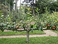 Jardin Albert Kahn, Boulogne-Billancourt (9970269363).jpg