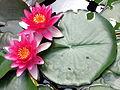Jardins des Martels 2014-06-01T12-41-26.jpg