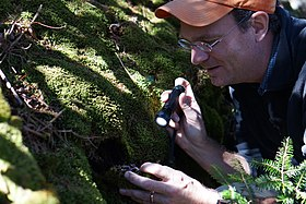 Jason Bond looks under moss for spruce-fir moss spiders (8125774114).jpg
