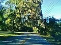 Jekyll Island State Park - panoramio (6).jpg