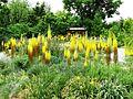 June's PlantAsia - Flickr - brewbooks.jpg