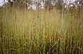 Kakadu National Park-1 (8309750816).jpg