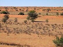 ナミビア-地理-Kalahari C17
