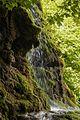 Karst Moos-Kalktuff-Sediment Gueterstein Schwaebische-Alb.jpg