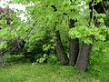 Kharkiv botanical garden 4.JPG