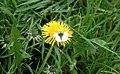 Kiltonga nature reserve, Newtownards (12) - geograph.org.uk - 411325.jpg