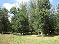 Kiseljak, Smederevska Palanka 78.jpg