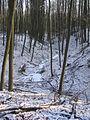Kleinbreitenbach Quellgebiet 281.JPG