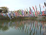 Koinobori in Kawakamikyo ravine water reflection view.JPG