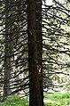 Kopaonik 0252.jpg