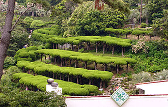 Topiary - Cloud-pruning only distantly related to natural forms in Hallyeo Haesang National Park, Geoje, South Korea