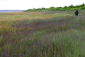 Southwest Alaska - Kvichak River marshes