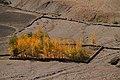 Kye Gompa-20-Felder-gje.jpg