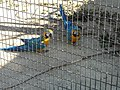 La cage des perroquets (2364140058).jpg