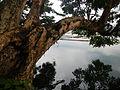 LakeSampalocjf7447 02.JPG