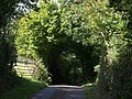 Lane below Tillerton - geograph.org.uk - 1494163.jpg
