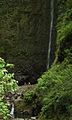 Laurissilva da Madeira 12.jpg