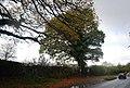 Layby, Powdermill Lane - geograph.org.uk - 1576626.jpg