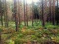 Leśny staw - panoramio (10).jpg