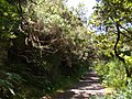 Levada do Risco, Madeira, Portugal, June-July 2011 - panoramio (36).jpg