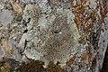 Lichen (30353952478).jpg
