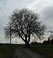 Lindenstruktur - panoramio.jpg