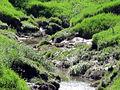Little Salt Creek tributary (salt marshes), Lincoln, Nebraska, USA.jpg