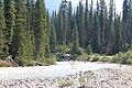 Little Yoho River IMG 4685.JPG