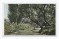 Live Oak Drive, Hope Ranch, Santa Barbara, Calif (NYPL b12647398-74304).tiff