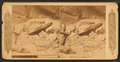 Lizard of New Mexico, by Continent Stereoscopic Company.png
