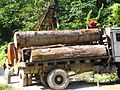 Logging Forest Loss IMG 3939 15.jpg