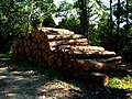 Logs in the woods - geograph.org.uk - 193672.jpg