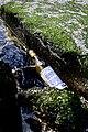 Lost Bottle (14265764663).jpg