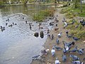 Lyubertsy, Moscow Oblast, Russia - panoramio - васильки.jpg