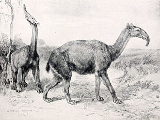 Macrauchenia - 1913 restoration of M. patachonica by Robert Bruce Horsfall. The animal may not have had a trunk