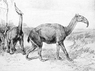 Taima-Taima - Prehistoric Macrauchenia, similar to Xenorhinotherium