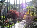 Madeira em Abril de 2011 IMG 1448 (5661803032).jpg