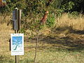 Madison Meadow w Sign.JPG