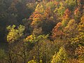 Magleš - zapadna Srbija - kanjon reke Gradac - Šuma u jesen detalj 4.jpg