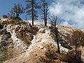 Mammoth Springs, Yellowstone NP - panoramio.jpg