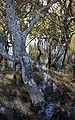 Mangrove-swamp-nz.jpg