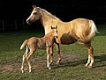 Mare and foal (Kvetina-Marie).jpg