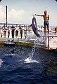 Marineland - Gulfport, Miss June 1958.jpg
